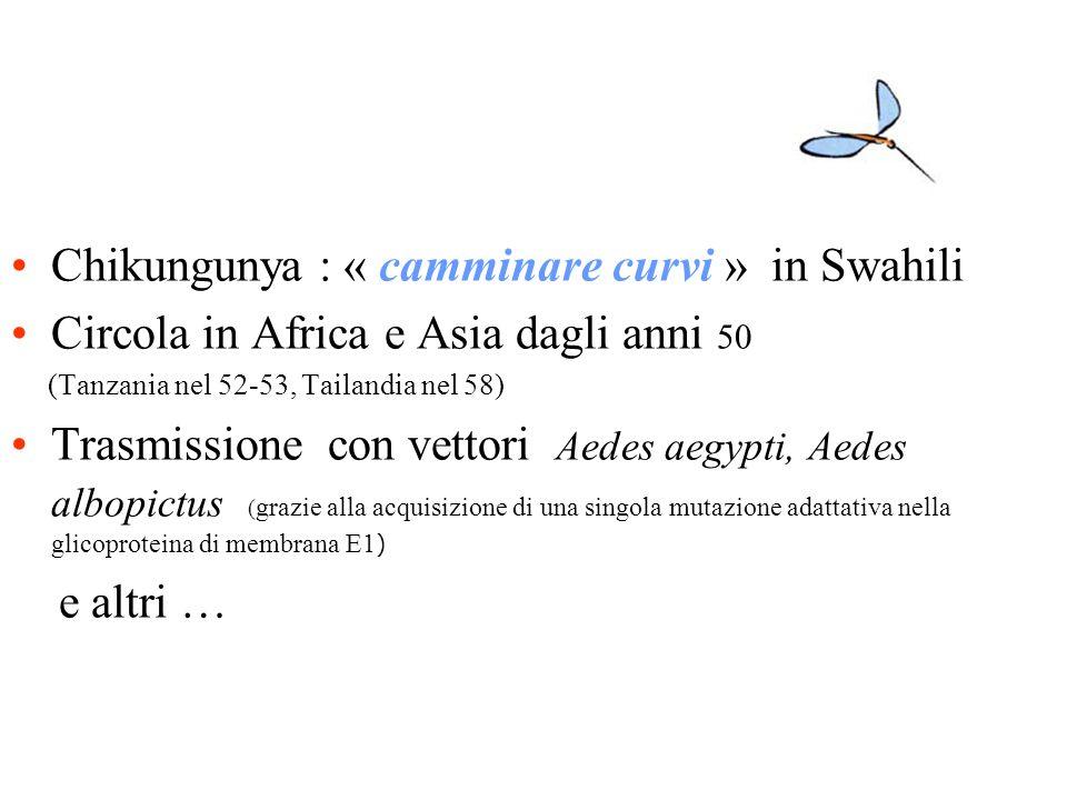 Chikungunya : « camminare curvi » in Swahili Circola in Africa e Asia dagli anni 50 (Tanzania nel 52-53, Tailandia nel 58) Trasmissione con vettori Ae