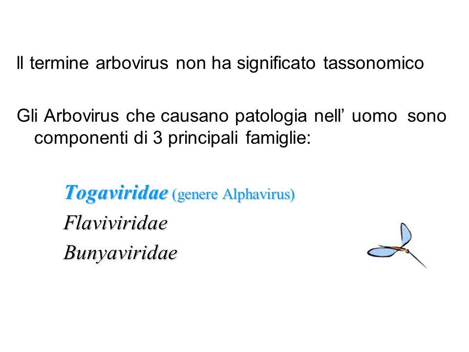 ll termine arbovirus non ha significato tassonomico Gli Arbovirus che causano patologia nell uomo sono componenti di 3 principali famiglie: Togavirida