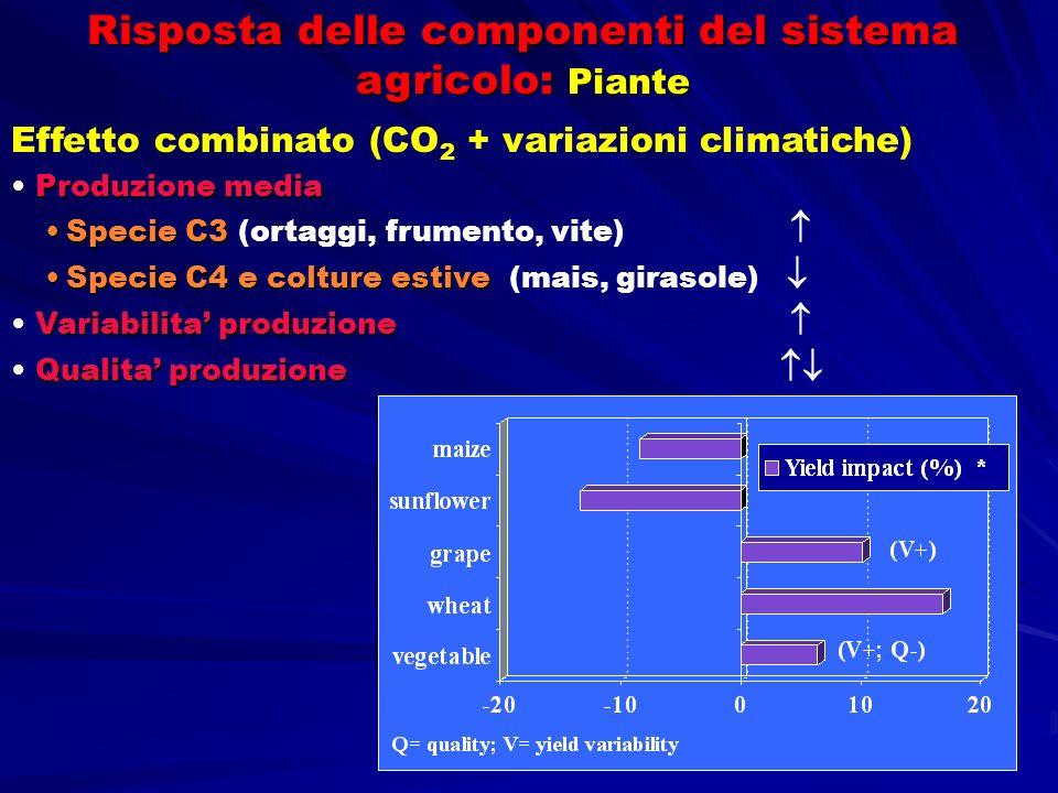 Risposta delle componenti del sistema agricolo: Piante Effetto combinato (CO 2 + variazioni climatiche) Produzione media Specie C3Specie C3 (ortaggi,