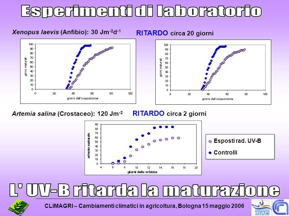 Xenopus laevis (Anfibio): 30 Jm -2 d -1 Artemia salina (Crostaceo): 120 Jm -2 Esposti rad. UV-B Controlli RITARDO circa 20 giorni RITARDO circa 2 gior