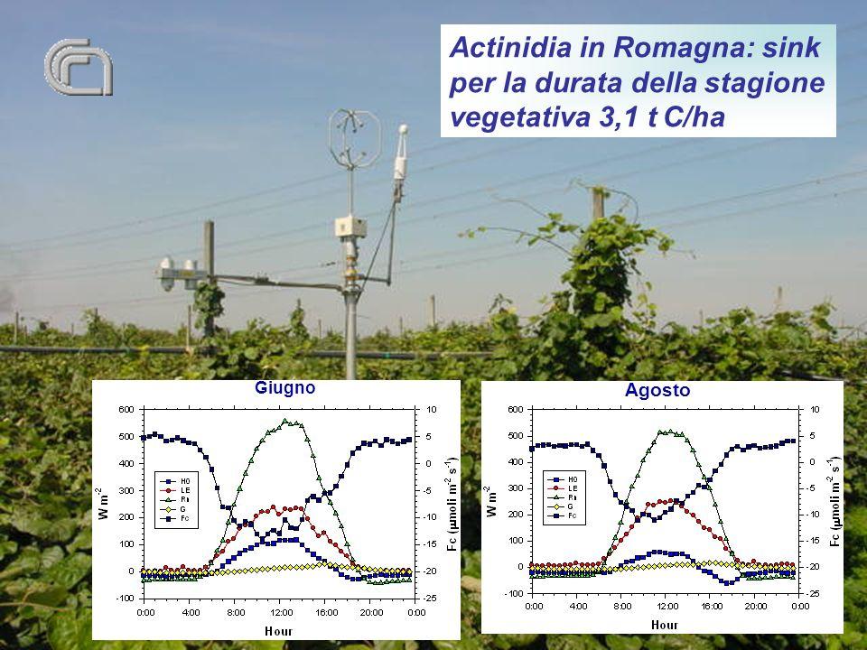 Actinidia in Romagna: sink per la durata della stagione vegetativa 3,1 t C/ha Giugno Agosto