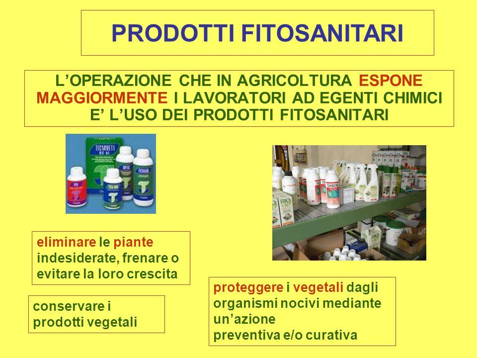 LOPERAZIONE CHE IN AGRICOLTURA ESPONE MAGGIORMENTE I LAVORATORI AD EGENTI CHIMICI E LUSO DEI PRODOTTI FITOSANITARI PRODOTTI FITOSANITARI eliminare le piante indesiderate, frenare o evitare la loro crescita proteggere i vegetali dagli organismi nocivi mediante unazione preventiva e/o curativa conservare i prodotti vegetali