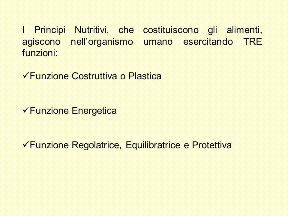I Principi Nutritivi, che costituiscono gli alimenti, agiscono nellorganismo umano esercitando TRE funzioni: Funzione Costruttiva o Plastica Funzione Energetica Funzione Regolatrice, Equilibratrice e Protettiva