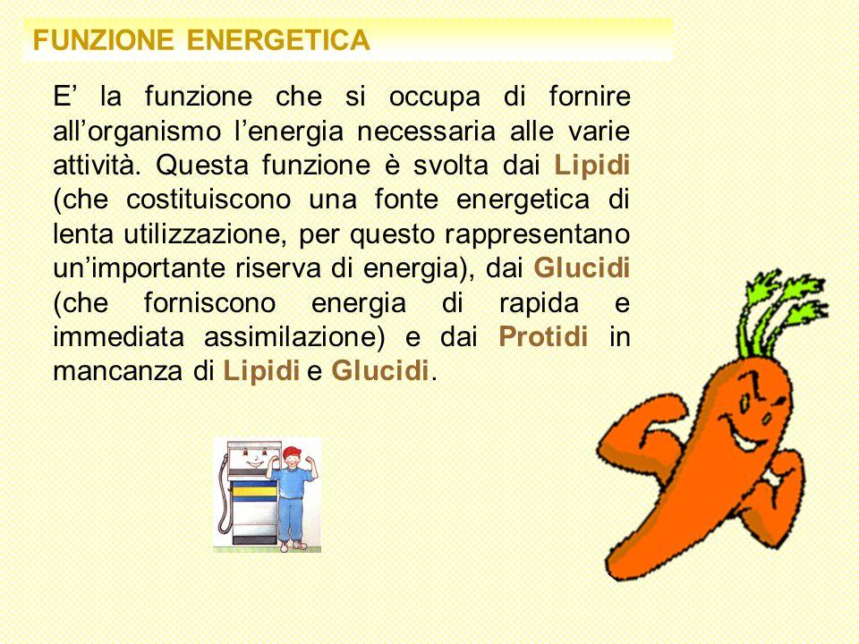 FUNZIONE ENERGETICA E la funzione che si occupa di fornire allorganismo lenergia necessaria alle varie attività. Questa funzione è svolta dai Lipidi (