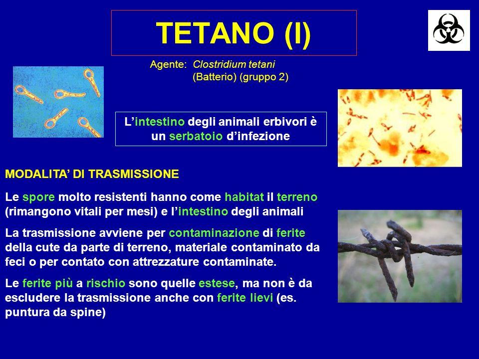 TETANO (I) Agente:Clostridium tetani (Batterio) (gruppo 2) MODALITA DI TRASMISSIONE Le spore molto resistenti hanno come habitat il terreno (rimangono