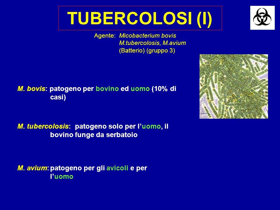 TUBERCOLOSI (I) M. bovis: patogeno per bovino ed uomo (10% di casi) M. tubercolosis:patogeno solo per luomo, il bovino funge da serbatoio M. avium:pat
