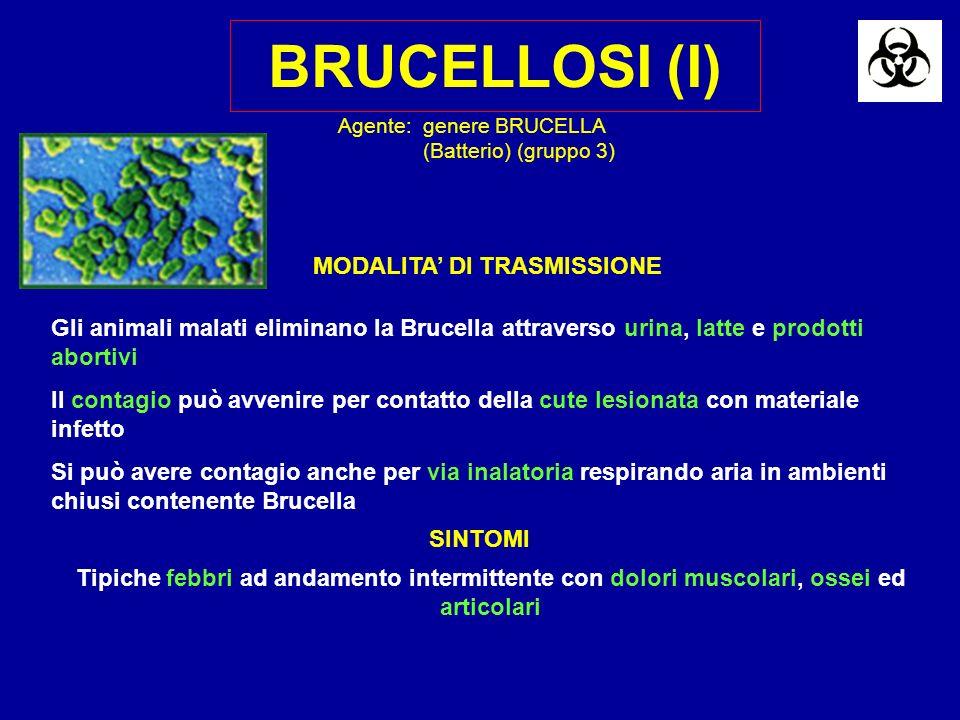 BRUCELLOSI (I) Gli animali malati eliminano la Brucella attraverso urina, latte e prodotti abortivi Il contagio può avvenire per contatto della cute lesionata con materiale infetto Si può avere contagio anche per via inalatoria respirando aria in ambienti chiusi contenente Brucella SINTOMI Tipiche febbri ad andamento intermittente con dolori muscolari, ossei ed articolari Agente:genere BRUCELLA (Batterio) (gruppo 3) MODALITA DI TRASMISSIONE