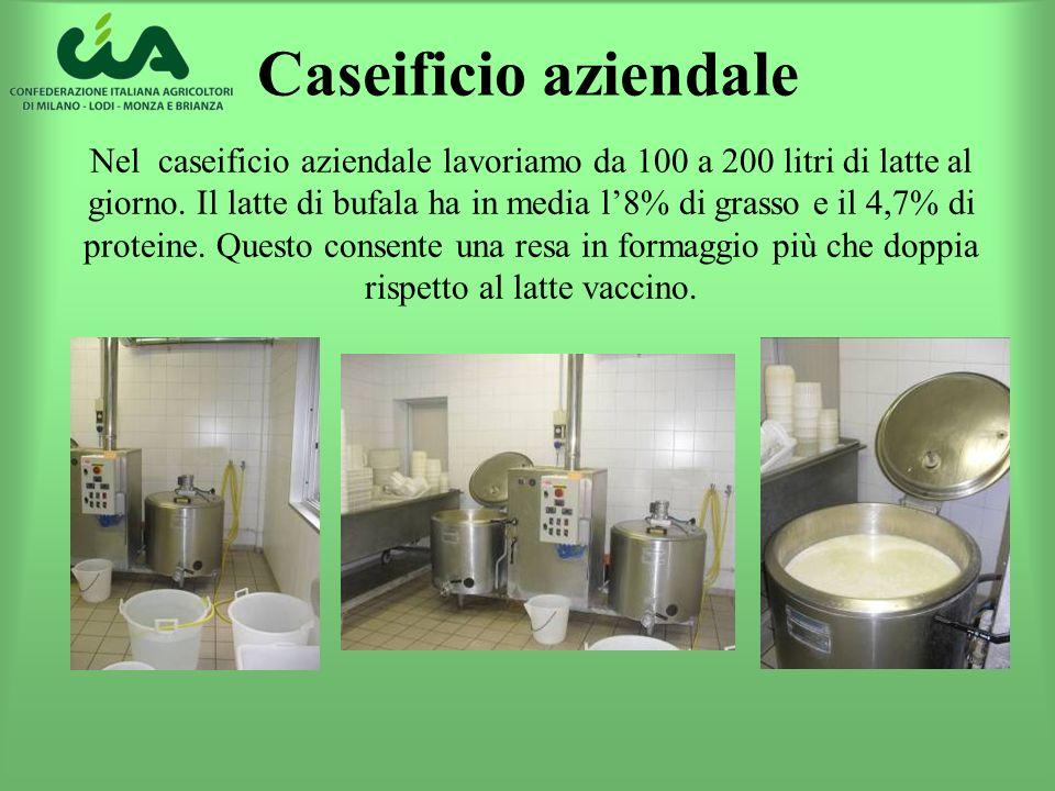 Caseificio aziendale Nel caseificio aziendale lavoriamo da 100 a 200 litri di latte al giorno. Il latte di bufala ha in media l8% di grasso e il 4,7%