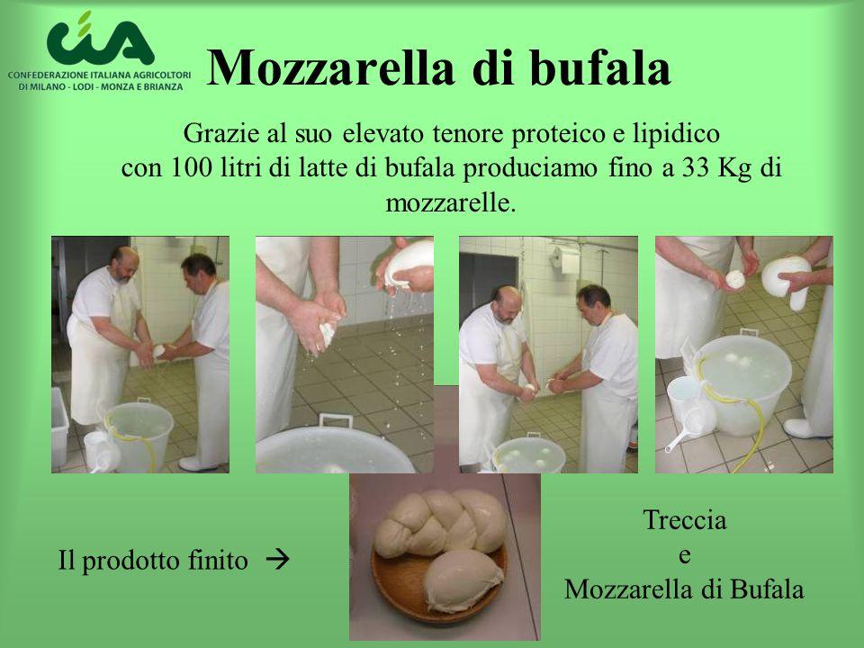 Mozzarella di bufala Grazie al suo elevato tenore proteico e lipidico con 100 litri di latte di bufala produciamo fino a 33 Kg di mozzarelle. Treccia