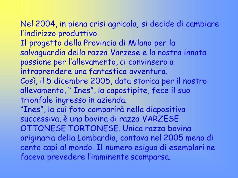 Nel 2004, in piena crisi agricola, si decide di cambiare lindirizzo produttivo. Il progetto della Provincia di Milano per la salvaguardia della razza