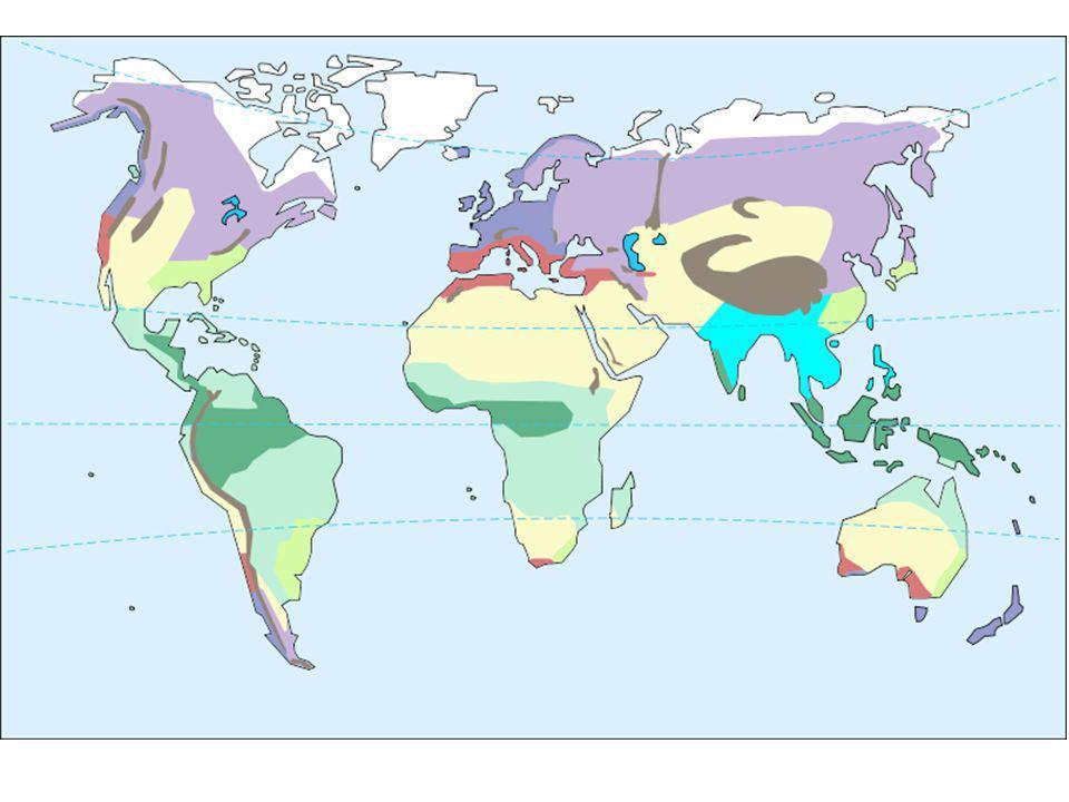Clima continentale fresco Regione centrale dellEuropa Inverni freddi ed estati calde -6°/+25°, forte escursione termica Piogge distribuite nellarco dellanno (prateria Parte più settentrionale aghifoglie (boschi non molto fitti; più a sud steppa (prateria secca)