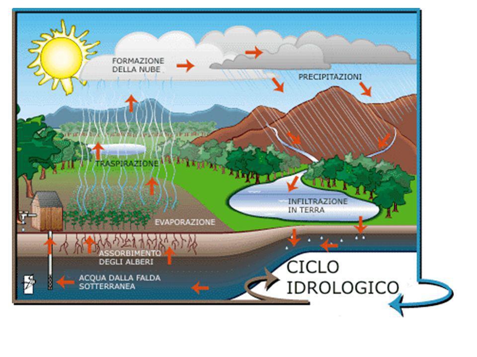 Il clima Determina il bioma (individuare quali)