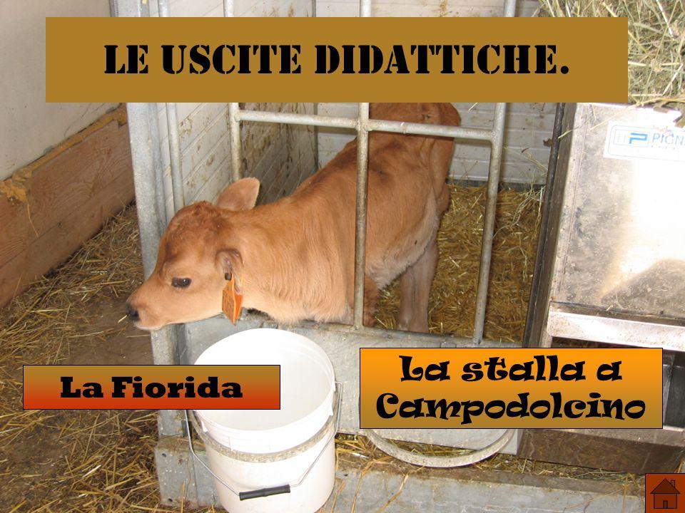 Le uscite didattiche. La Fiorida La stalla a Campodolcino