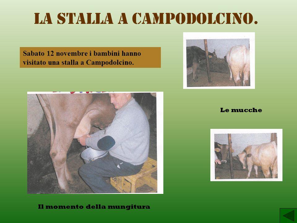 La stalla a Campodolcino.Sabato 12 novembre i bambini hanno visitato una stalla a Campodolcino.
