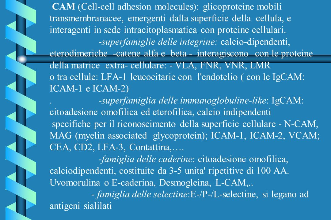 CAM (Cell-cell adhesion molecules): glicoproteine mobili transmembranacee, emergenti dalla superficie della cellula, e interagenti in sede intracitopl