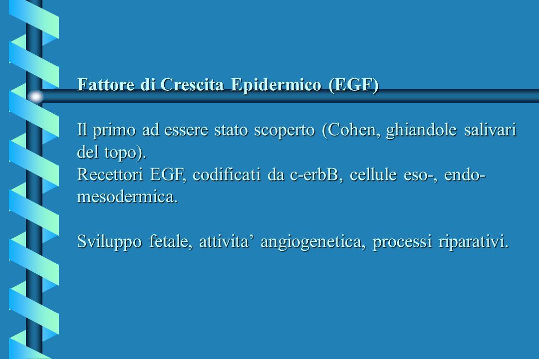 Fattore di Crescita Epidermico (EGF) Il primo ad essere stato scoperto (Cohen, ghiandole salivari del topo). Recettori EGF, codificati da c-erbB, cell