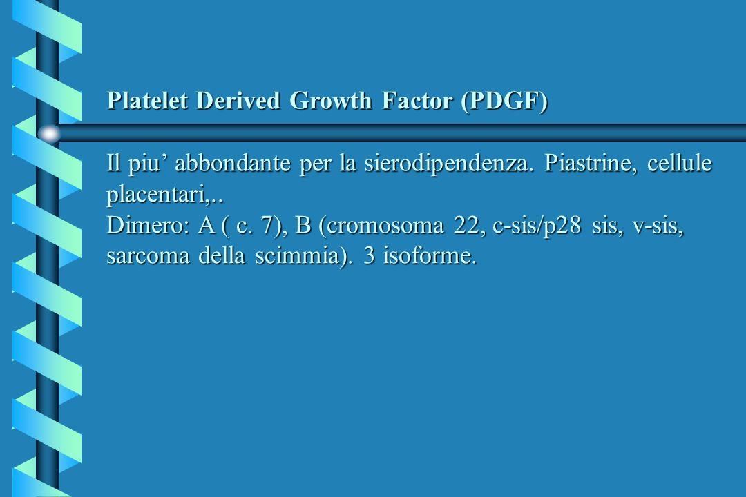 Platelet Derived Growth Factor (PDGF) Il piu abbondante per la sierodipendenza. Piastrine, cellule placentari,.. Dimero: A ( c. 7), B (cromosoma 22, c