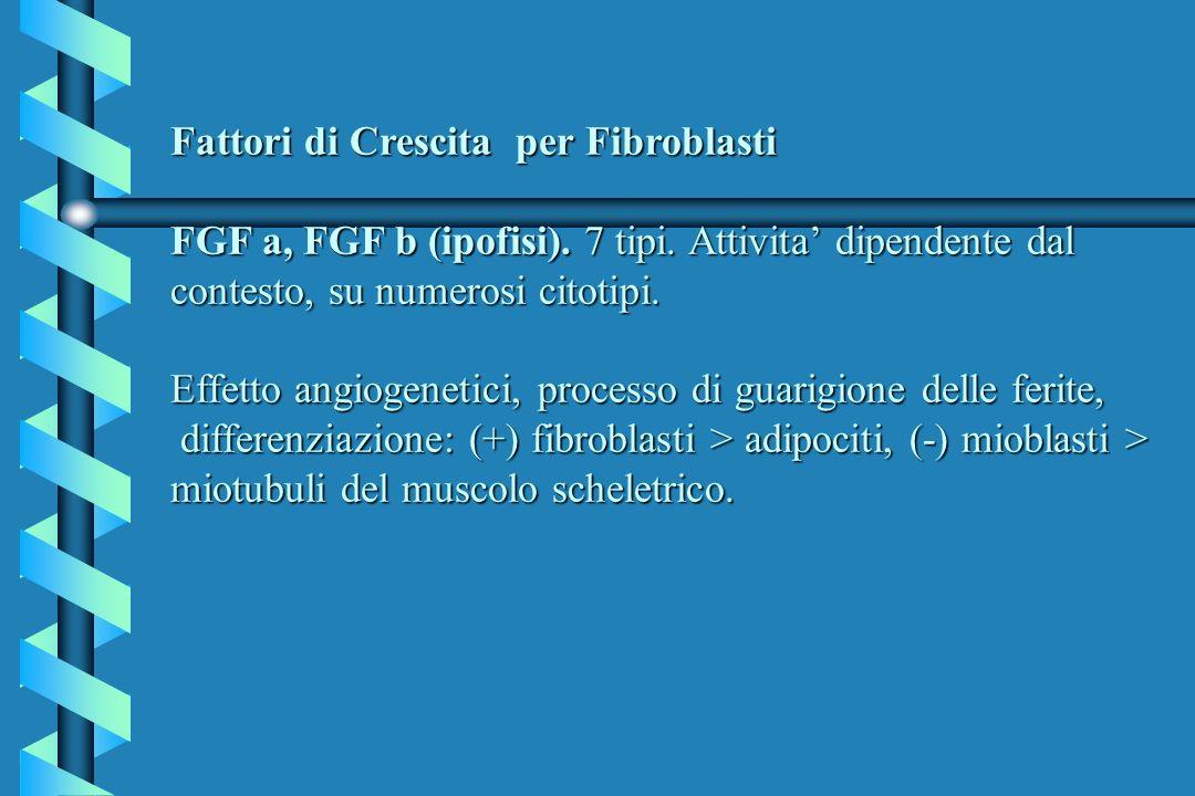 Fattori di Crescita per Fibroblasti FGF a, FGF b (ipofisi). 7 tipi. Attivita dipendente dal contesto, su numerosi citotipi. Effetto angiogenetici, pro