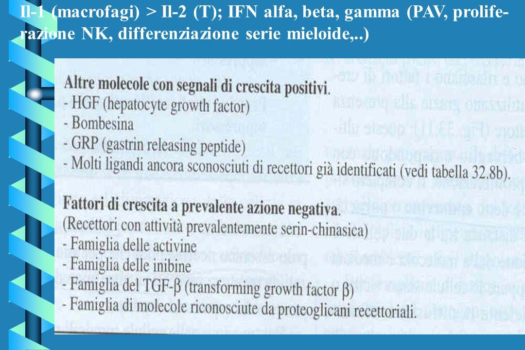 Il-1 (macrofagi) > Il-2 (T); IFN alfa, beta, gamma (PAV, prolife- razione NK, differenziazione serie mieloide,..)