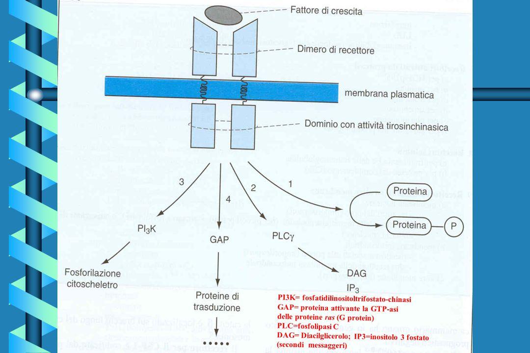 PI3K= fosfatidilinositoltrifostato-chinasi GAP= proteina attivante la GTP-asi delle proteine ras (G protein) PLC=fosfolipasi C DAG= Diacilglicerolo; I