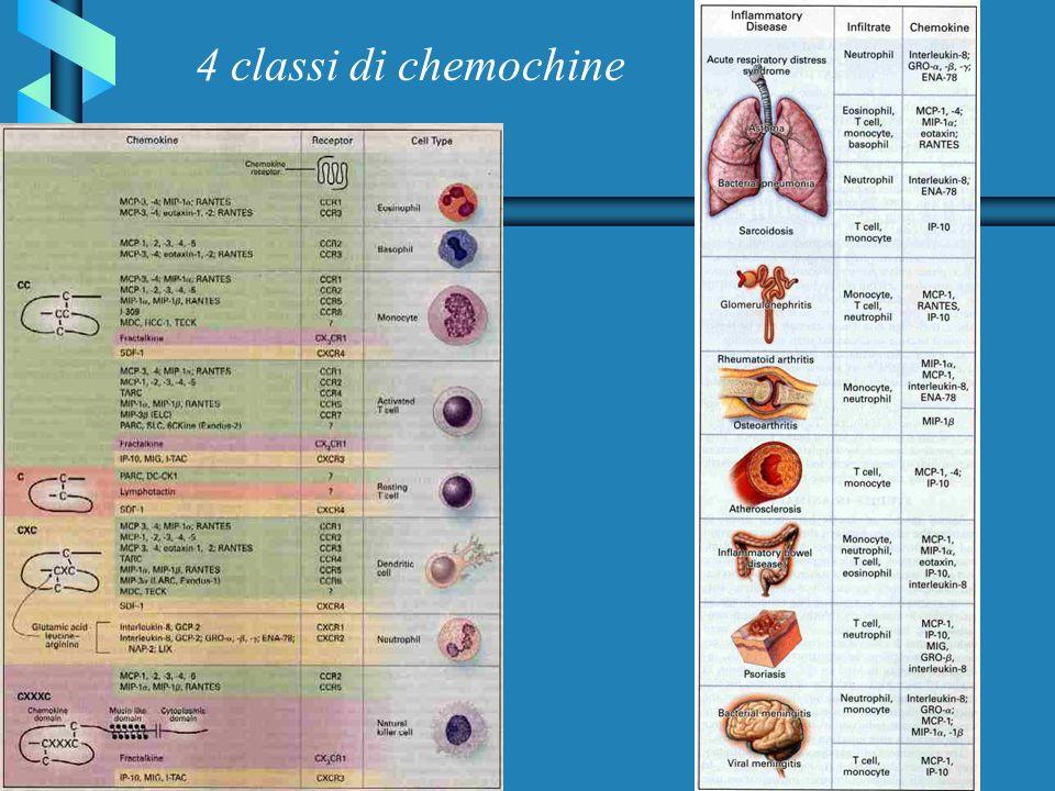 4 classi di chemochine