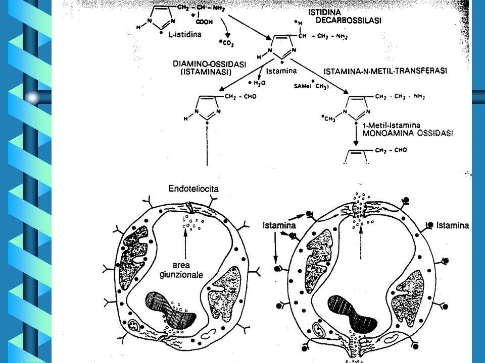 MEDIATORI CELLULARI PREFORMATI E DI NUOVA SINTESI: MEDIATORI CELLULARI PREFORMATI E DI NUOVA SINTESI: - Eicosanoidi Il secondo sistema genera prostaglandine (PGD2, PGF2alfa, PGE2), nonche prostaciclina (PGI2, nell endotelio) e trombossano (TXA2, nelle piastrine), sostanze che rivestono ruoli importanti di mediatori della flogosi, del dolore e dell ipertermia.