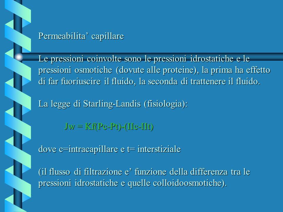 Permeabilita capillare Le pressioni coinvolte sono le pressioni idrostatiche e le pressioni osmotiche (dovute alle proteine), la prima ha effetto di f