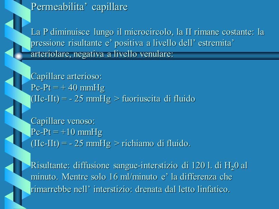 Permeabilita capillare La P diminuisce lungo il microcircolo, la II rimane costante: la pressione risultante e positiva a livello dell estremita arter