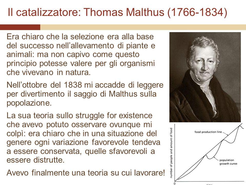 Il catalizzatore: Thomas Malthus (1766-1834) Era chiaro che la selezione era alla base del successo nellallevamento di piante e animali: ma non capivo