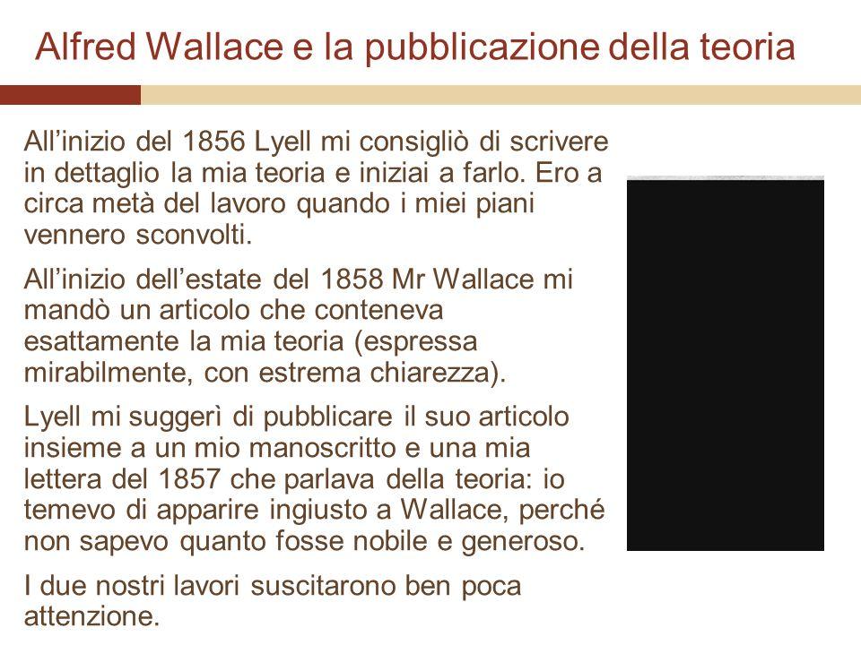 Alfred Wallace e la pubblicazione della teoria Allinizio del 1856 Lyell mi consigliò di scrivere in dettaglio la mia teoria e iniziai a farlo. Ero a c