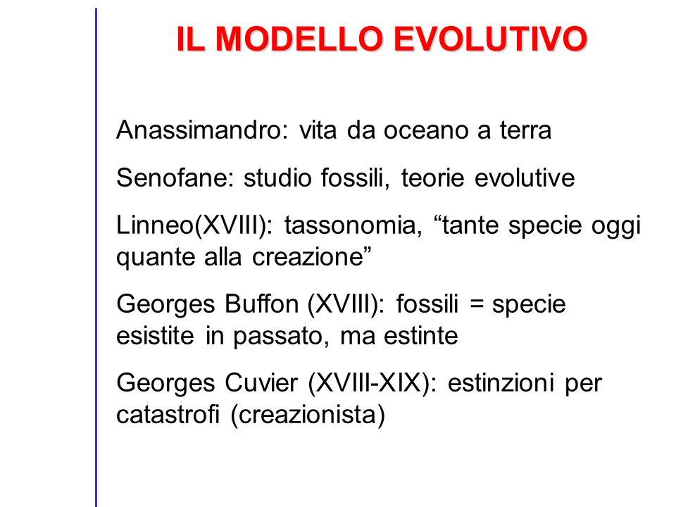 IL MODELLO EVOLUTIVO Anassimandro: vita da oceano a terra Senofane: studio fossili, teorie evolutive Linneo(XVIII): tassonomia, tante specie oggi quan