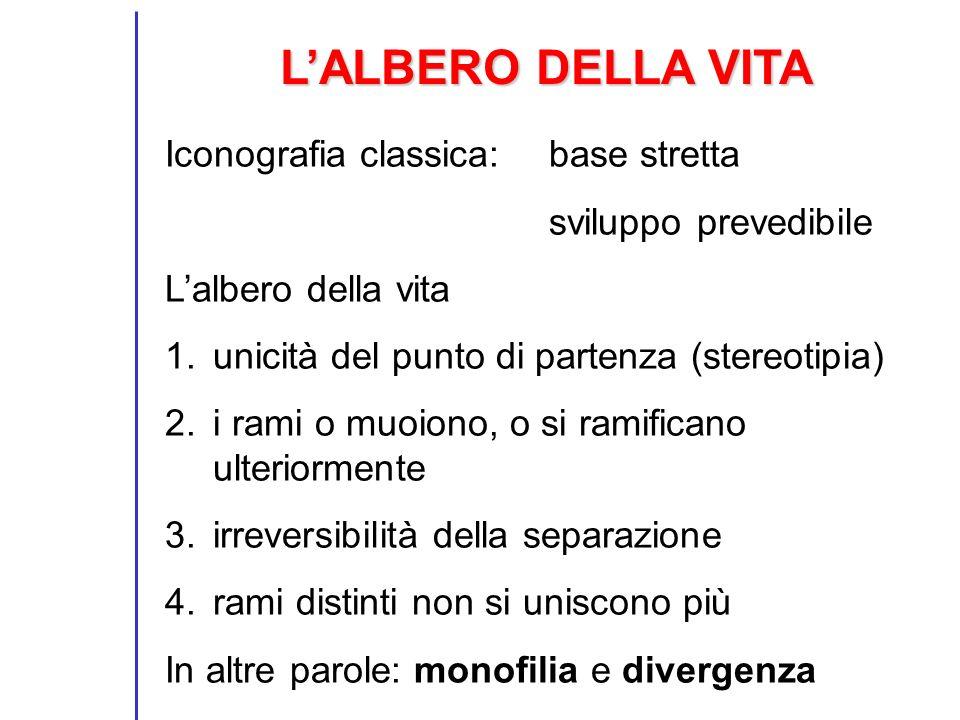 LALBERO DELLA VITA Iconografia classica: base stretta sviluppo prevedibile Lalbero della vita 1.unicità del punto di partenza (stereotipia) 2.i rami o