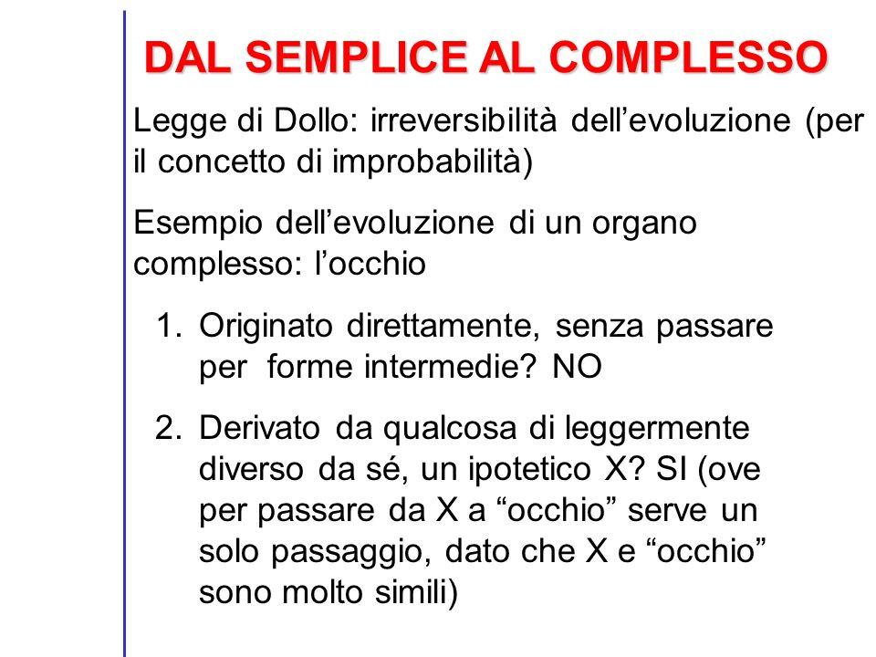 DAL SEMPLICE AL COMPLESSO Legge di Dollo: irreversibilità dellevoluzione (per il concetto di improbabilità) Esempio dellevoluzione di un organo comple