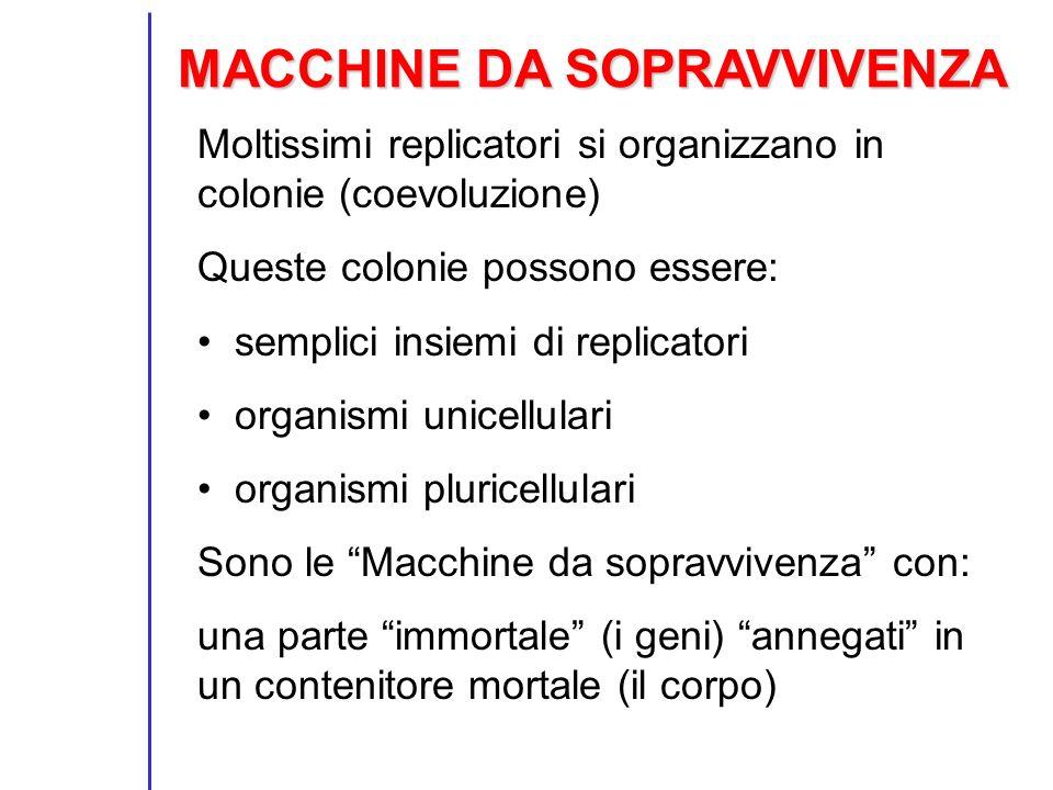 MACCHINE DA SOPRAVVIVENZA Moltissimi replicatori si organizzano in colonie (coevoluzione) Queste colonie possono essere: semplici insiemi di replicato