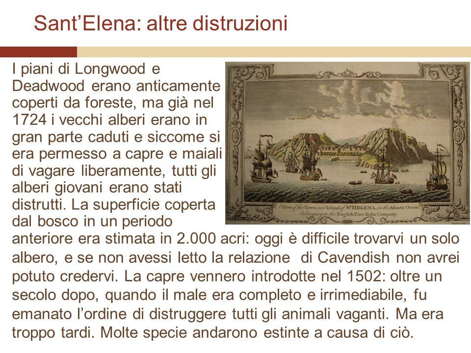 SantElena: altre distruzioni I piani di Longwood e Deadwood erano anticamente coperti da foreste, ma già nel 1724 i vecchi alberi erano in gran parte