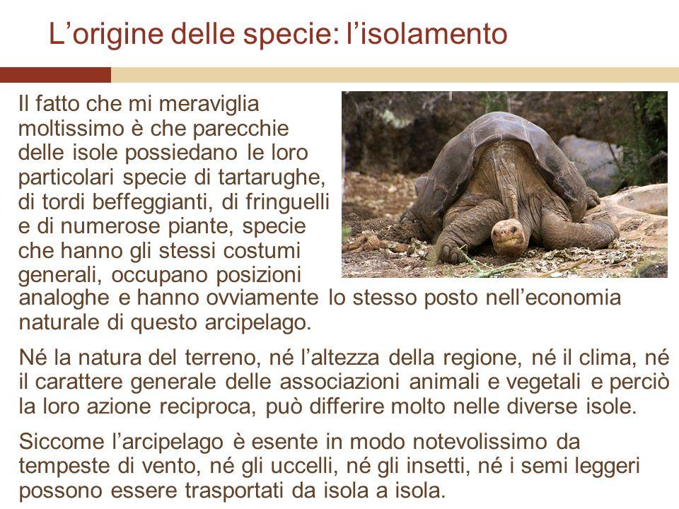 Lorigine delle specie: lisolamento Il fatto che mi meraviglia moltissimo è che parecchie delle isole possiedano le loro particolari specie di tartarug