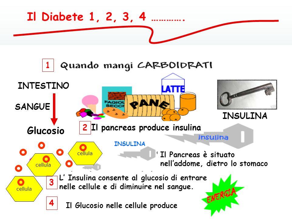 IL DIABETE 1, 2, 3………… glucosio INSULINA CELLULA 1 3 2 La chiave che apre il serbatoio della cellula (INSULINA) permette alla glicemia di diminuire ne