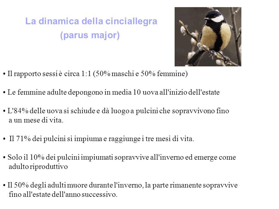 La dinamica della cinciallegra (parus major) Il rapporto sessi è circa 1:1 (50% maschi e 50% femmine) Le femmine adulte depongono in media 10 uova all