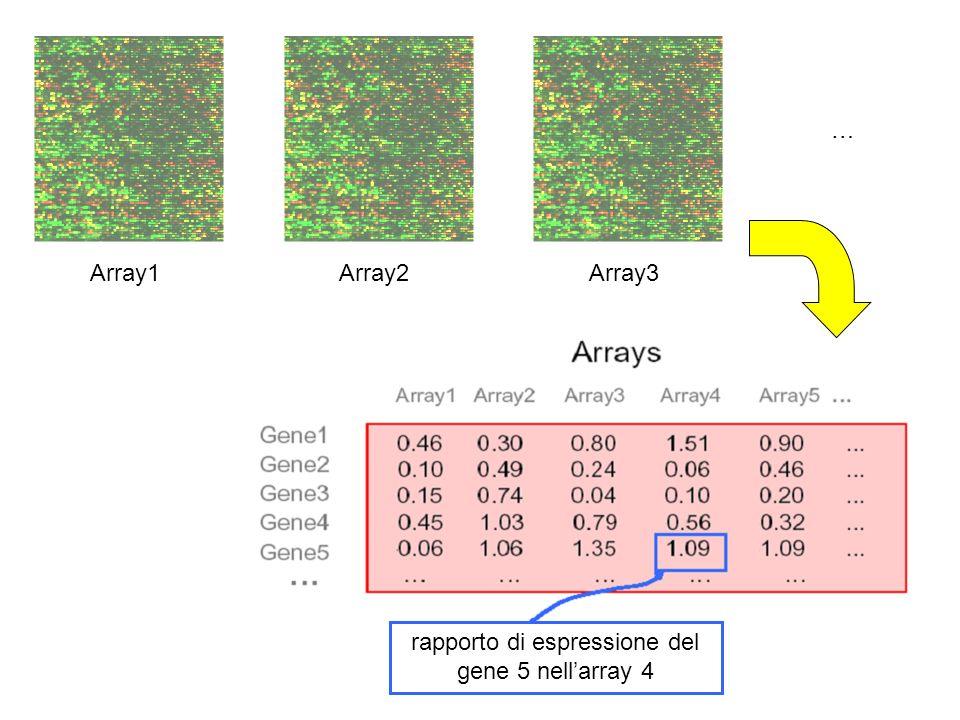 rapporto di espressione del gene 5 nellarray 4 Array1Array2Array3 …