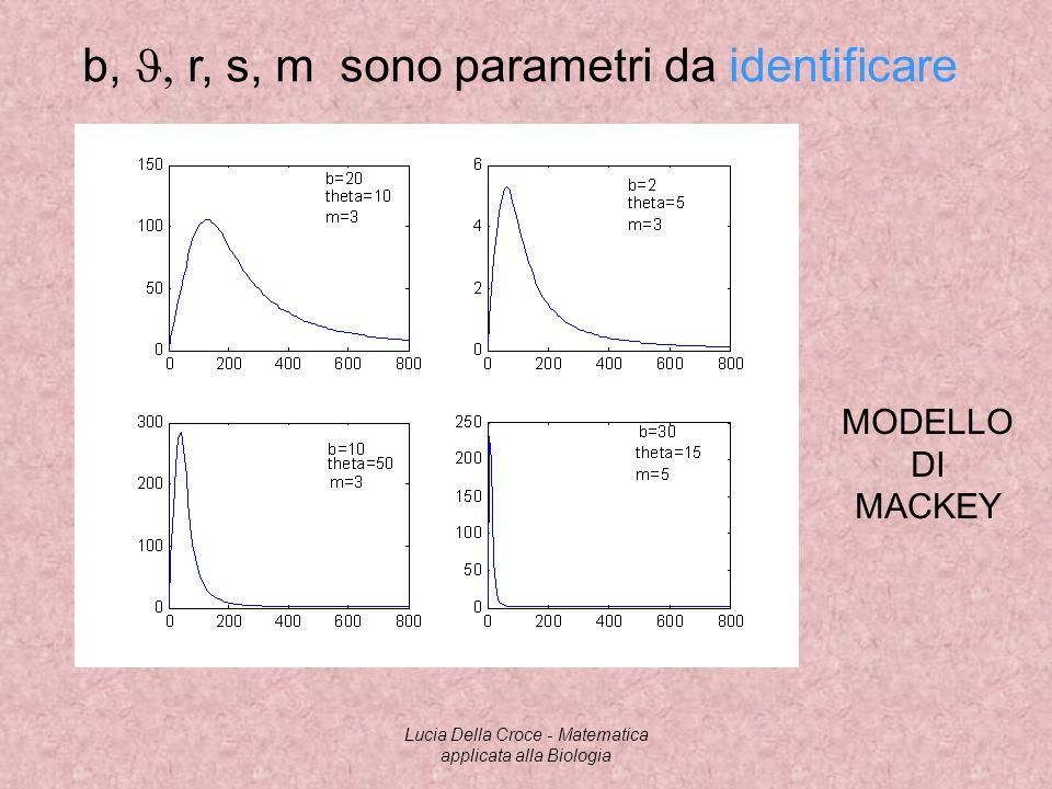 b, r, s, m sono parametri da identificare MODELLO DI MACKEY Lucia Della Croce - Matematica applicata alla Biologia