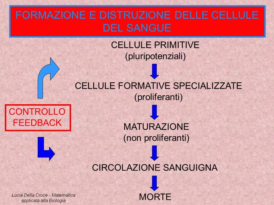 FORMAZIONE E DISTRUZIONE DELLE CELLULE DEL SANGUE CELLULE PRIMITIVE (pluripotenziali) CELLULE FORMATIVE SPECIALIZZATE (proliferanti) MATURAZIONE (non