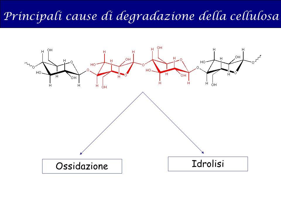 Principali cause di degradazione della cellulosa Ossidazione Idrolisi