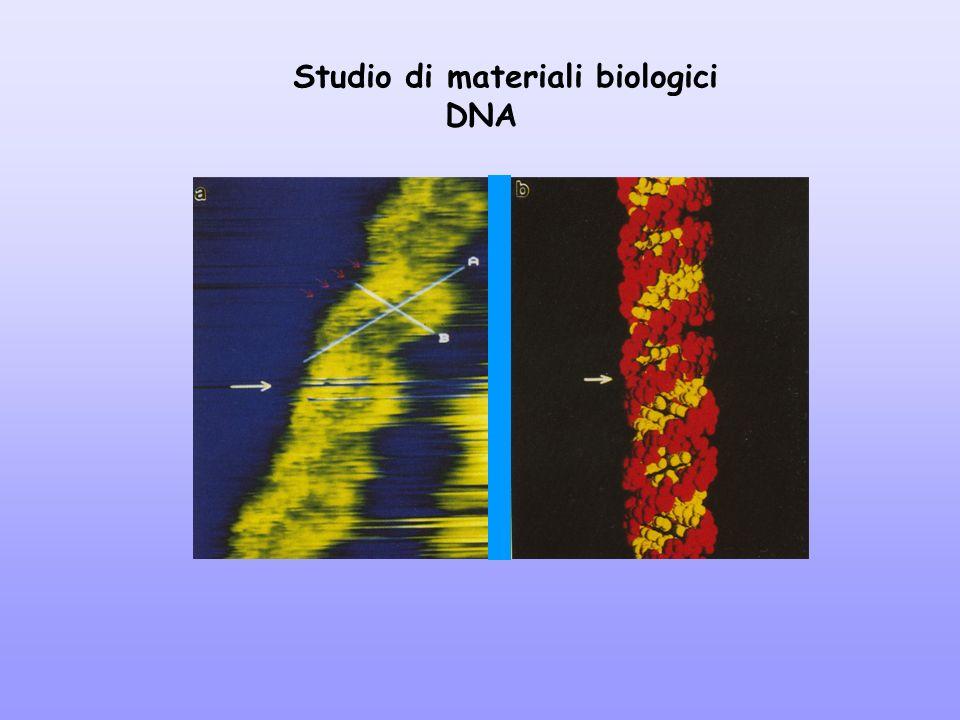 Studio di materiali biologici DNA