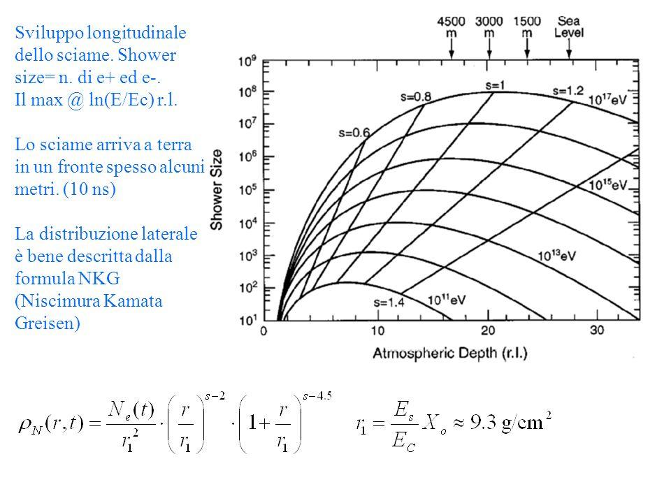 Sviluppo longitudinale dello sciame. Shower size= n.