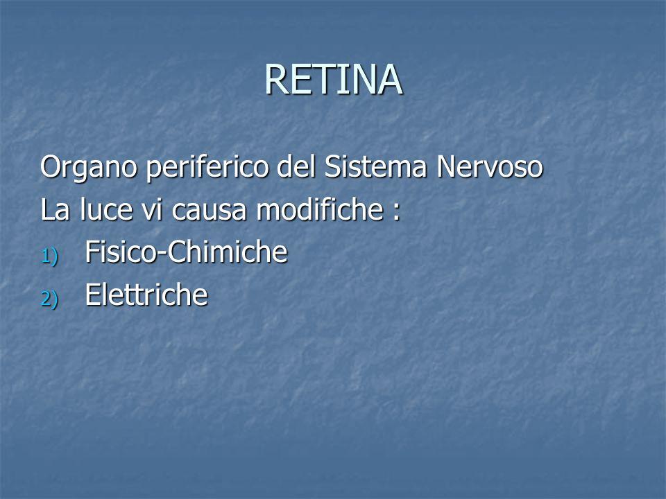 RETINA Organo periferico del Sistema Nervoso La luce vi causa modifiche : 1) Fisico-Chimiche 2) Elettriche