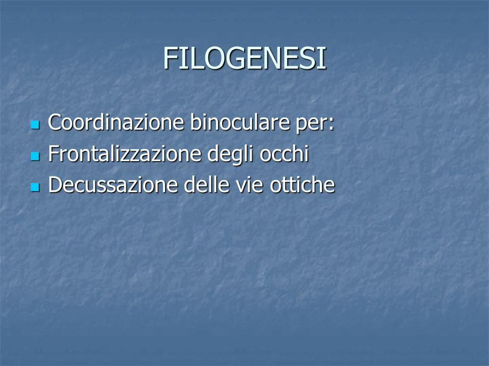FILOGENESI Coordinazione binoculare per: Coordinazione binoculare per: Frontalizzazione degli occhi Frontalizzazione degli occhi Decussazione delle vi