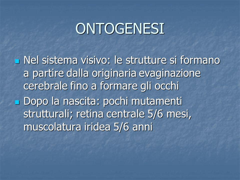 ONTOGENESI Nel sistema visivo: le strutture si formano a partire dalla originaria evaginazione cerebrale fino a formare gli occhi Nel sistema visivo: