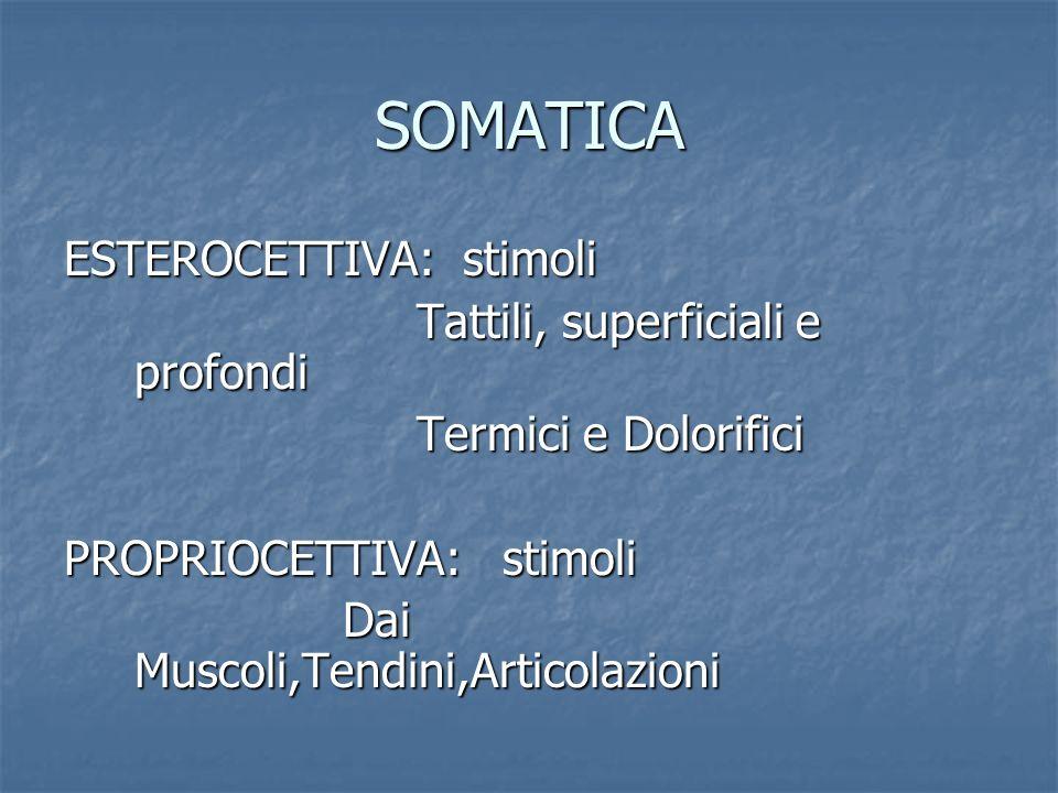 SOMATICA ESTEROCETTIVA: stimoli Tattili, superficiali e profondi Tattili, superficiali e profondi Termici e Dolorifici Termici e Dolorifici PROPRIOCET