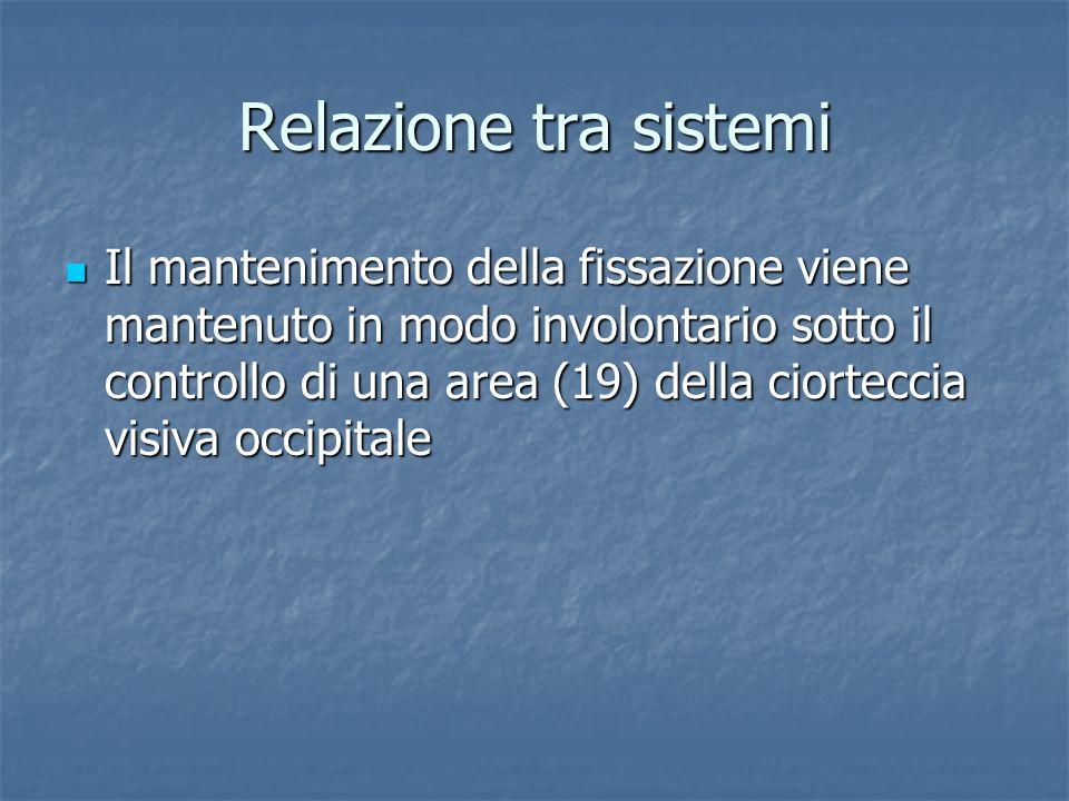Relazione tra sistemi Il mantenimento della fissazione viene mantenuto in modo involontario sotto il controllo di una area (19) della ciorteccia visiv