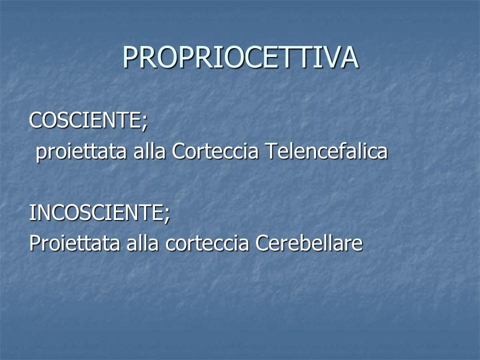 PROPRIOCETTIVA COSCIENTE; proiettata alla Corteccia Telencefalica proiettata alla Corteccia TelencefalicaINCOSCIENTE; Proiettata alla corteccia Cerebe